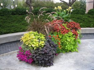 Downtown Boise Flower Planters